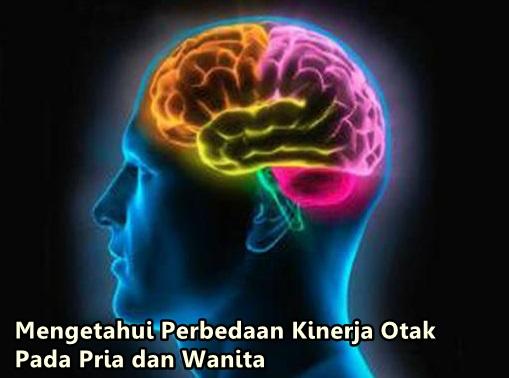 pebedaan kinerja otak